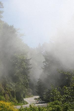 Orick, แคลิฟอร์เนีย: Prairie Creek Redwoods SP - Fog rolling in from the ocean