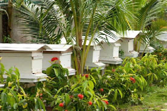 The Ranch Resort : The bee hives.