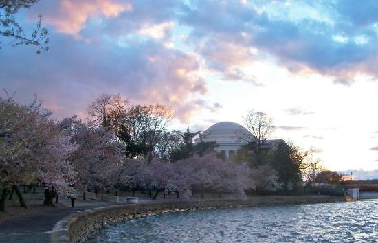 The Jefferson Memorial on the last day of Cherry blossom