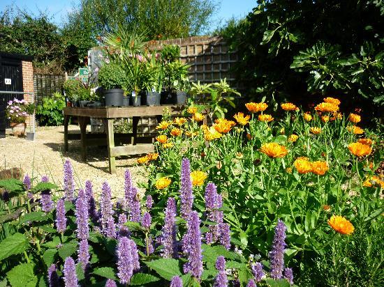 Image Result For Garden Cafe New Milford Hours