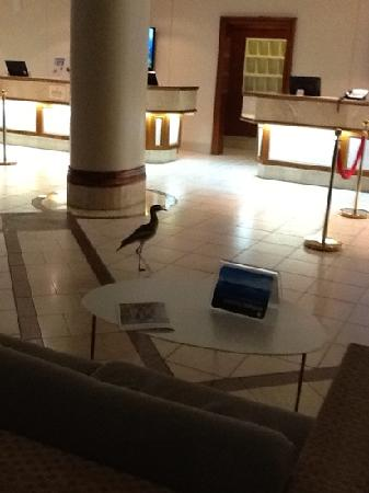 Glanced up to see something running by~midnight in the lobby.
