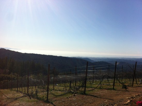 Loma Prieta Winery: View of the ocean and Monterey off in the left distance from the winery
