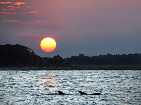 Fernandina Beach, FL: Dolphins At Dusk