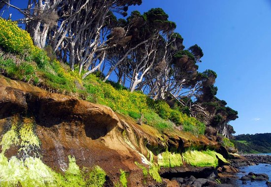 Wynyard, Australië: Beautiful rock shelf at the western end