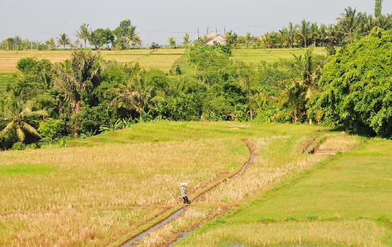 Balam Bali Villa: Breakfast view