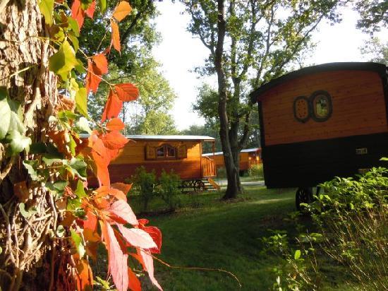automne en bordure de for t photo de les roulottes de bois le roi bois le roi tripadvisor. Black Bedroom Furniture Sets. Home Design Ideas