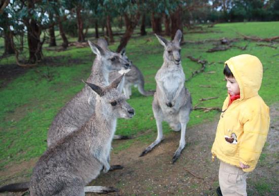 Wildlife Park Of Philip Island