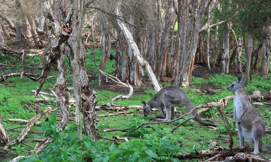 Cowes, Australia: Small jungle