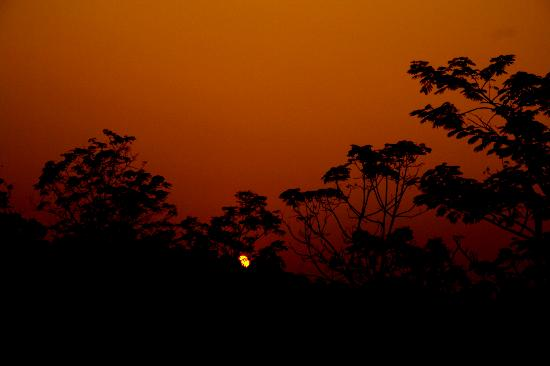 Gorumara Elephant Camp : sunset fro camp