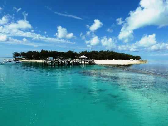 Heron Island Resort: La isla vista desde el ferry