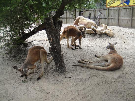 Prehistoric Path Picture Of Central Florida Zoo Botanical Gardens Sanford Tripadvisor