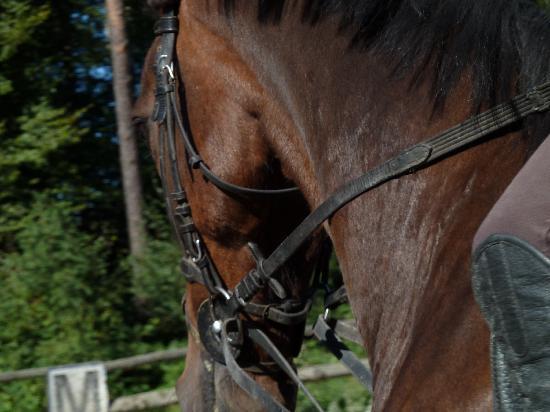 Hotel Neubichler Alm: Pferde und Ponies