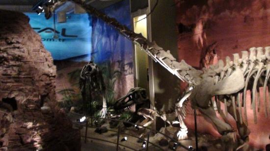 Jurassic Land: replicas of dinosaur fossils