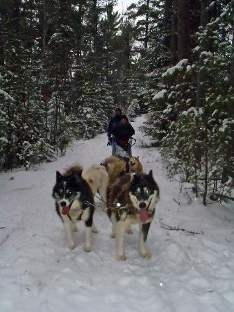 Wintergreen Dogsled Lodge: On the trails
