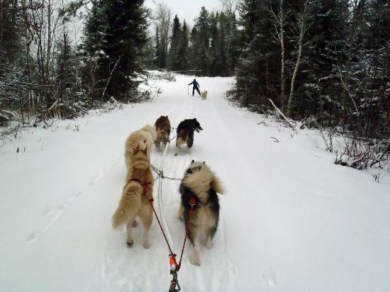 Wintergreen Dogsled Lodge: Sue and Izzie guiding us