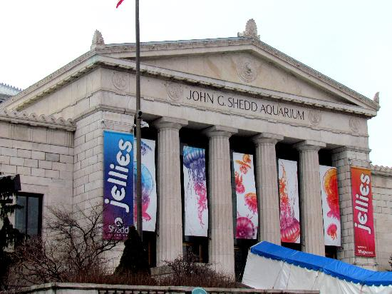 Beautiful Building Inside And Out Picture Of Shedd