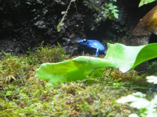Zoo Miami: Poison Dart Frog