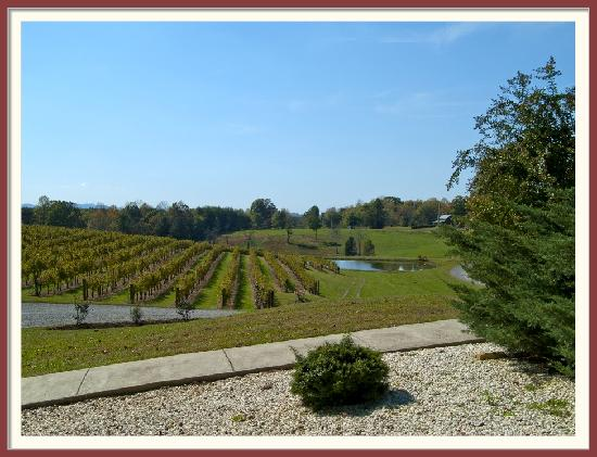 Stony Knoll Vineyards: Another angled view of the Vinyards area
