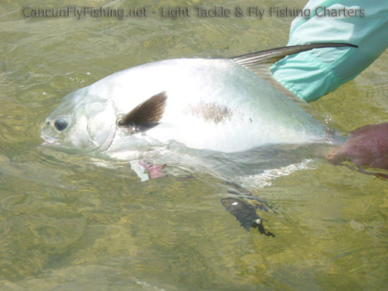 Cancun fly fishing light tackle and fly fishing charters for Fishing in cancun