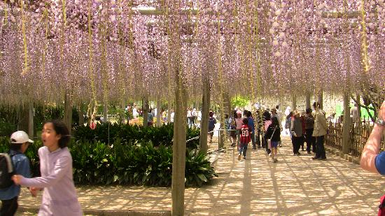 Karatsu Castle: Very fragrant flowers.