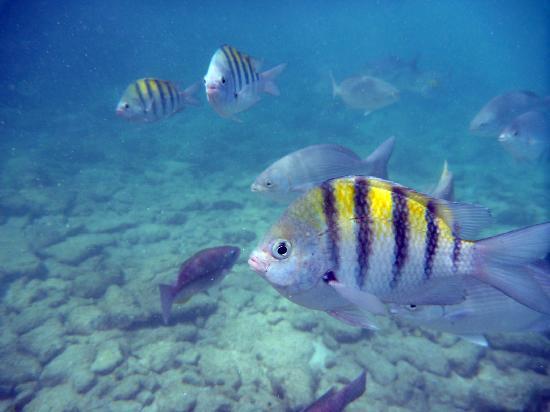 Baby Beach: Fish