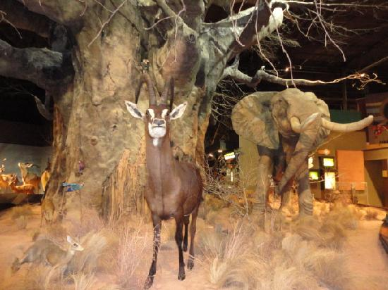 Anniston Museum of Natural History照片