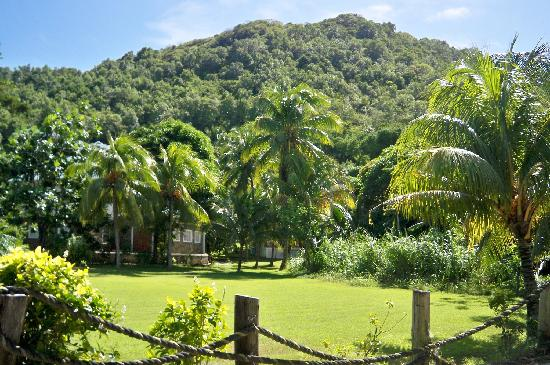 De Reef Apartments: de reef apts grounds bequia