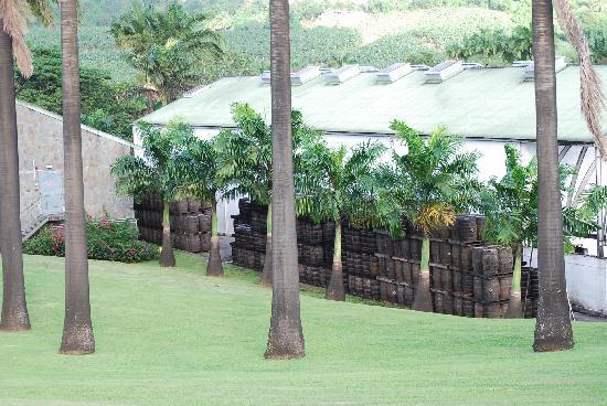 Habitation Clement: vue sur jardin