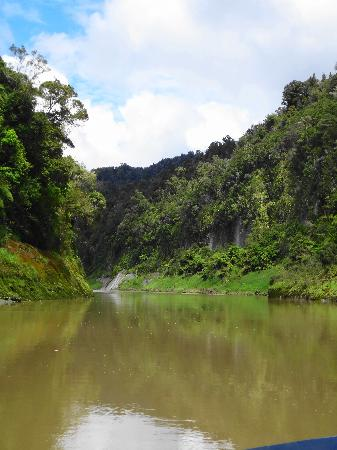 Spirit of the River Jet - Whanganui River: Amazing Views