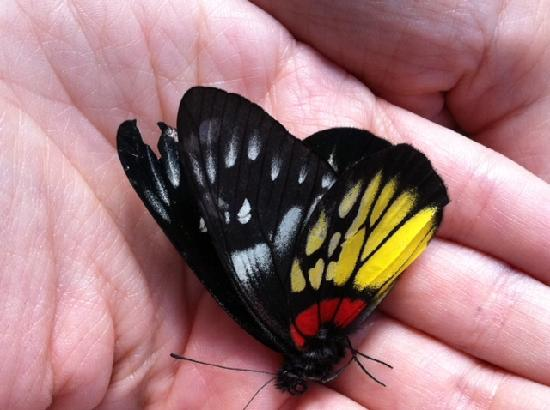 Tharnthong Lodges: Butterfly Heaven, good hiking
