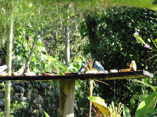 Casa De Los Celtas: De feeding of the birds