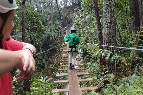 Big Island Eco Adventures II Zipline Canopy Tour: Suspension Bridge
