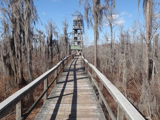 Grand Bay Wildlife Management Area: The boardwalk looking at firetower
