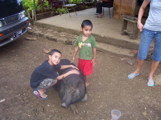 Keleti International Resort: my son with a friendly pig