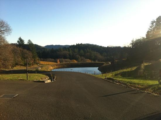 Cakebread Cellars: just ONE of the beautiful sights to have lunch