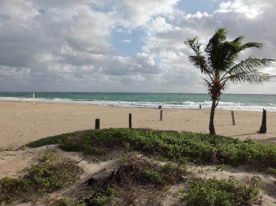 Surfside Resort: Strand, wirklich nur ein paar Meter zu Fuß