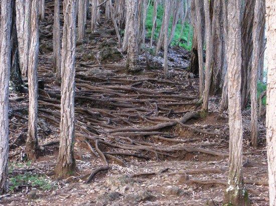 Makiki Trail