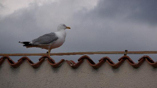 Apartments Pical: Sea Gull on Roof by Apartment