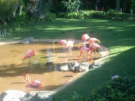 Honolulu Zoo: Flamigos!