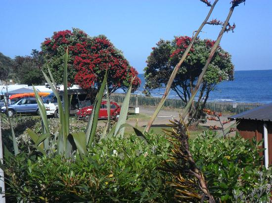 Oakura Beach Holiday Park: The beautiful views
