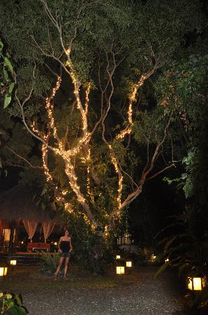 Mandala Spa & Resort Villas: Christmas in fron of reception