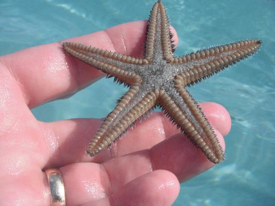 Hotel Riu Palace Tropical Bay: Star Fish on the Beach