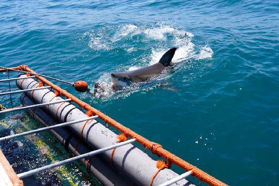 4 Heaven Guesthouse: Der weisse Hai als reality Programm