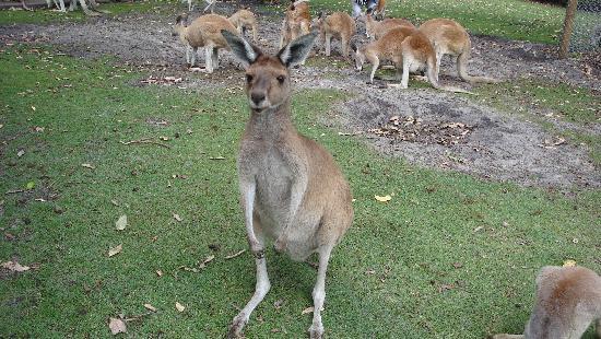 Caversham Wildlife Park: Wildlife park , Perth