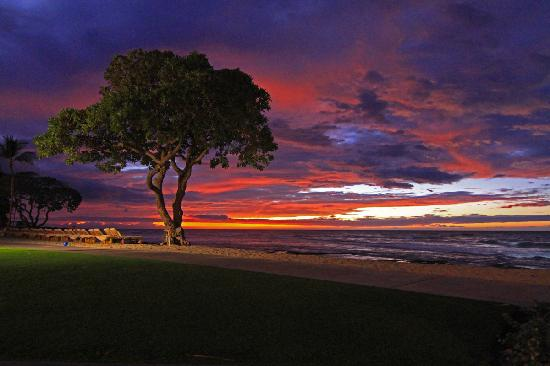 Four Seasons Resort Hualalai: Brilliant Beach Tree Sunset