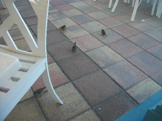 The Point : Diferentes tipos de pájaros forman parte del Staff
