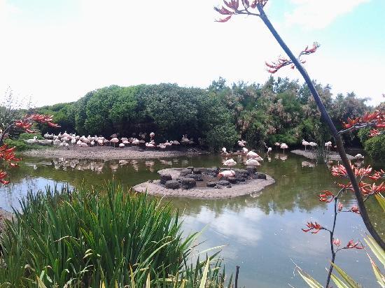 Aquarium: Flamencos