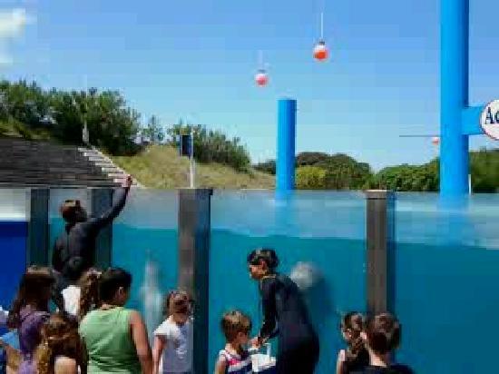 Aquarium: Delfines saludando niños