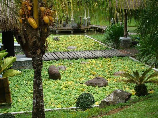 Rafael Farm: Pond