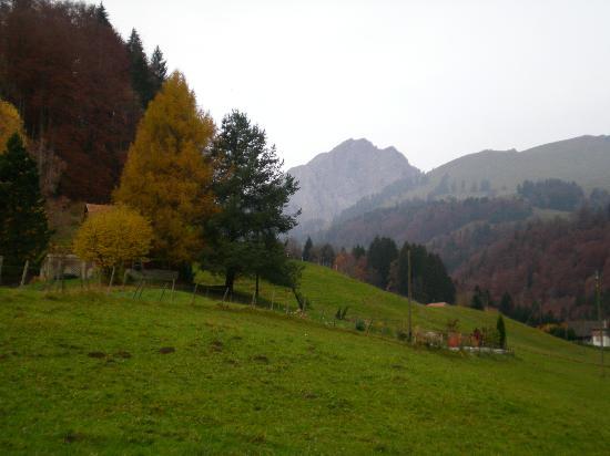 La Combaz d'Amont : Alpine meadow in late autumn
